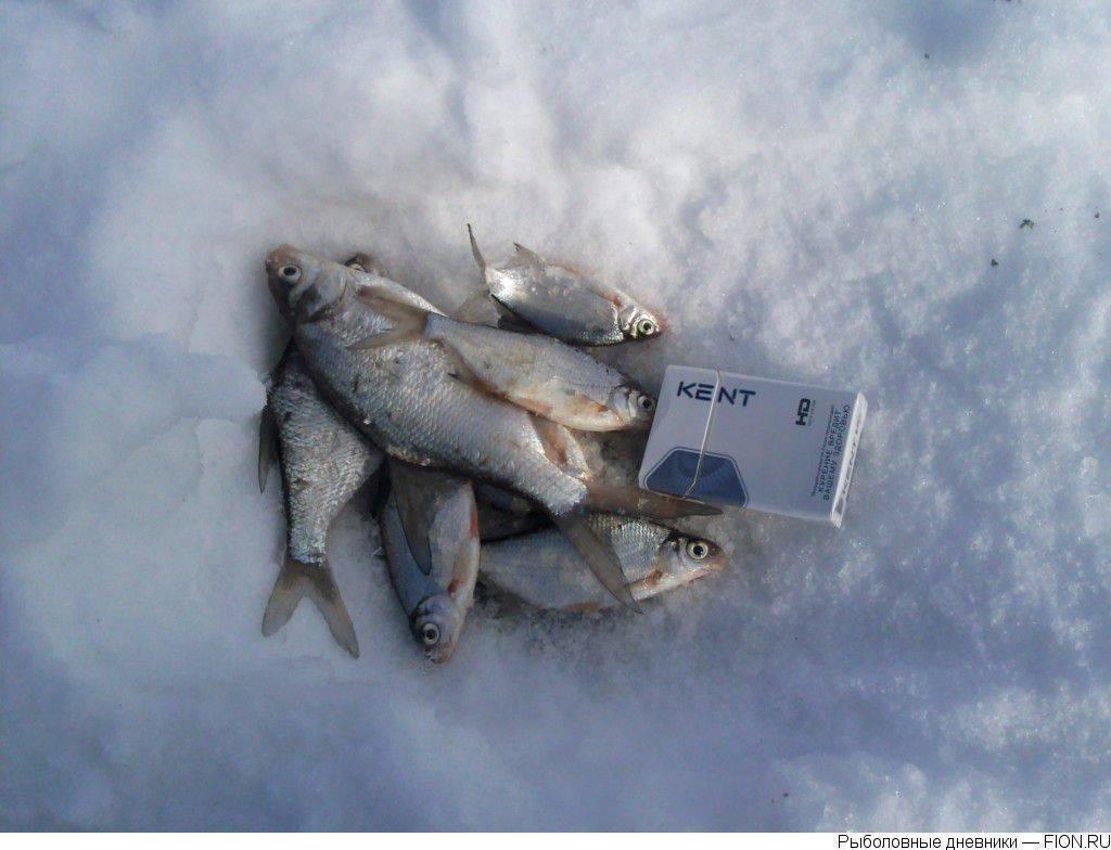 Можайское водохранилище, можайск — рыбалка, отдых ноябрь 2020, берега, глубина, пляжи, как добраться