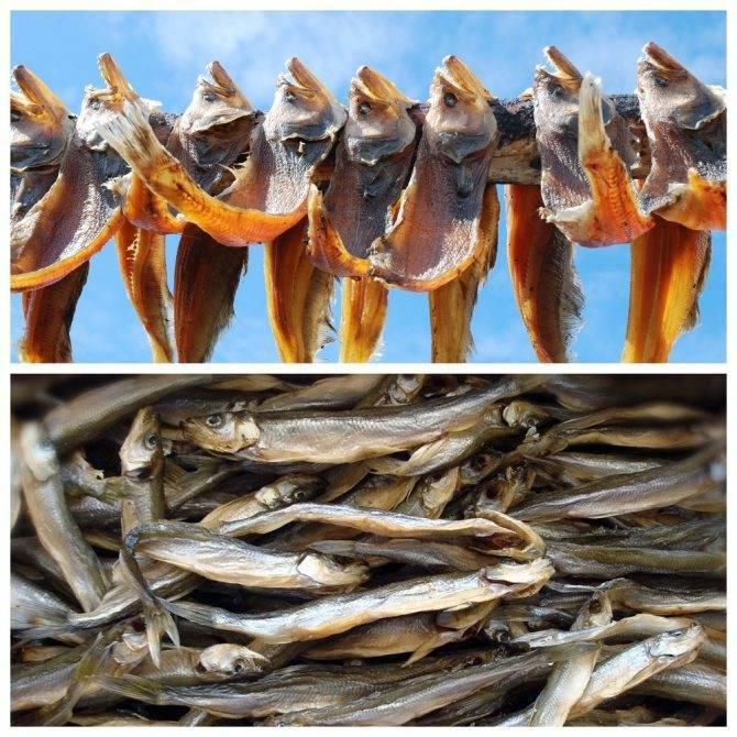 Как правильно хранить вяленую и сушеную рыбу