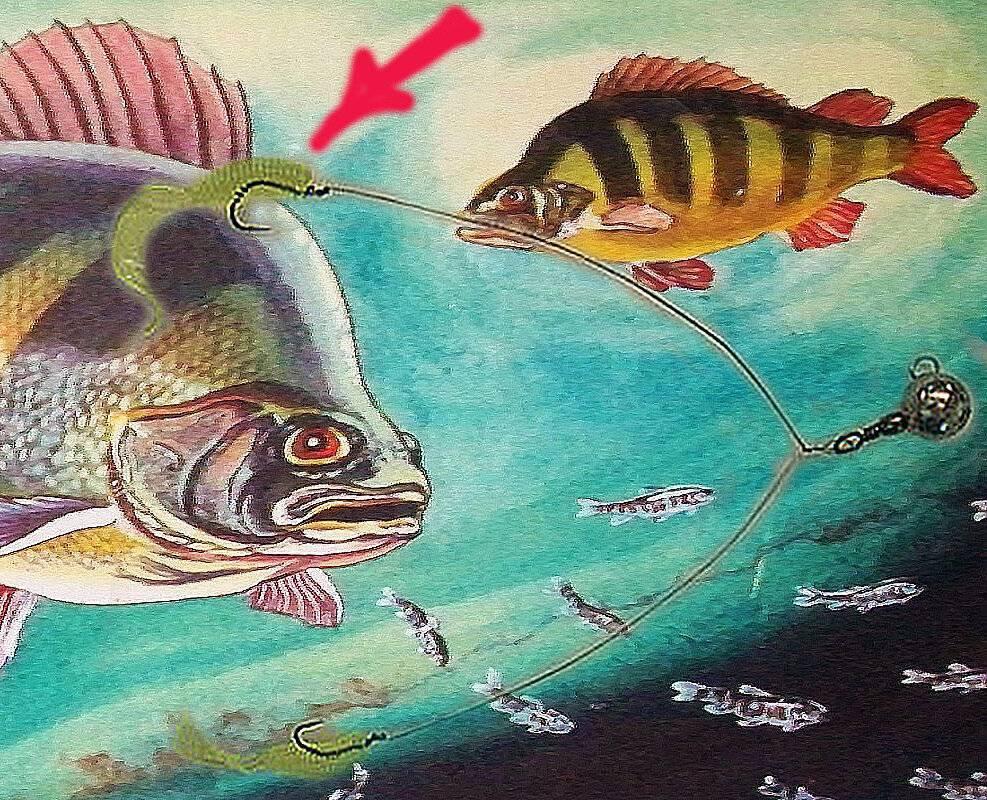 Зимние бокоплавы на окуня и тактика рыбалки со льда