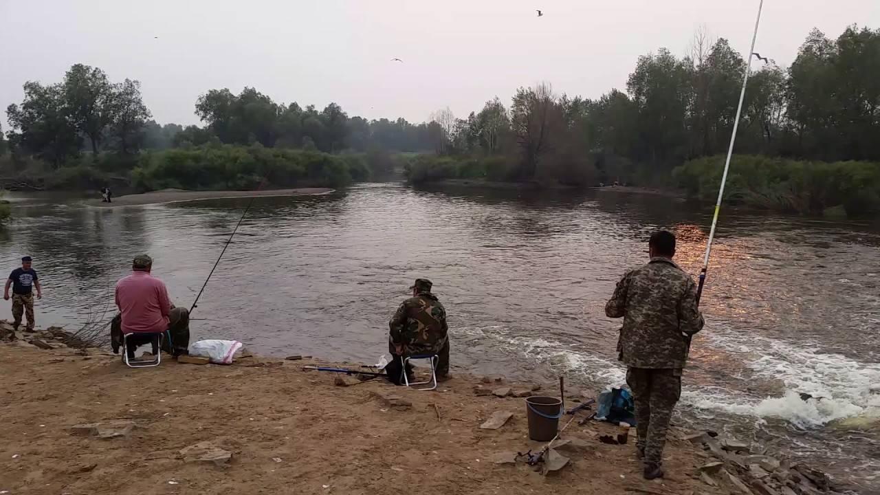 Какая рыба есть в реке ишим - рыбалка