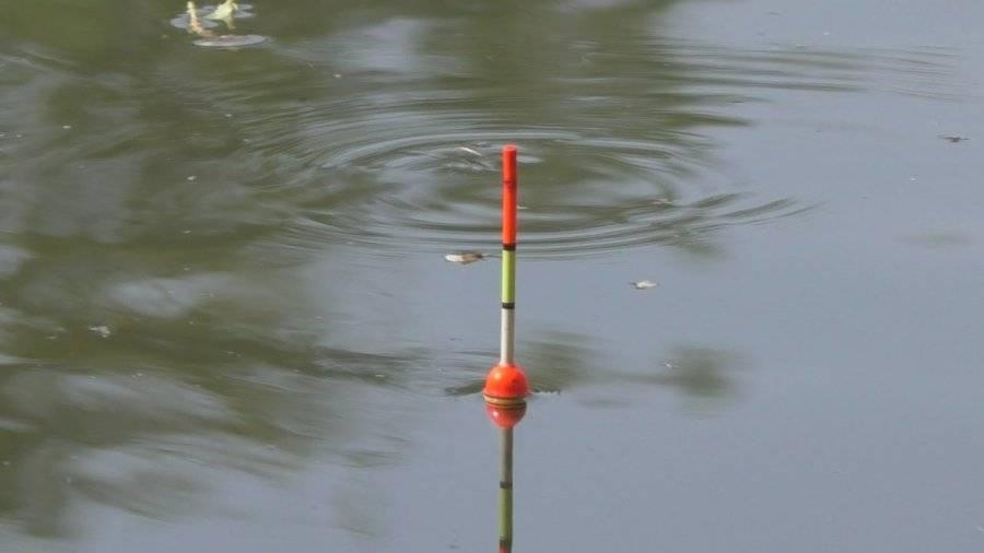 Ловля уклейки на поплавочную удочку: снасть и оснастка, прикормки и наживки
