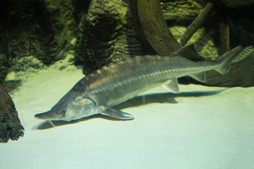 Как спят рыбы (петушки, гуппи, золотые) в аквариуме: делают ли они это ночью
