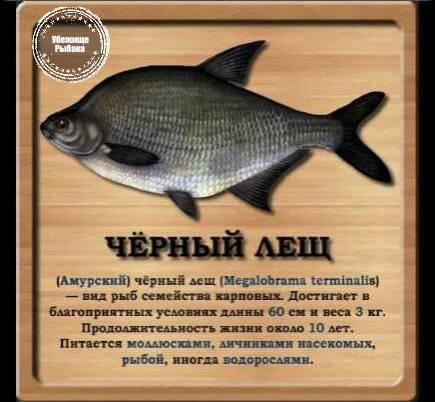 Рыбы амура.