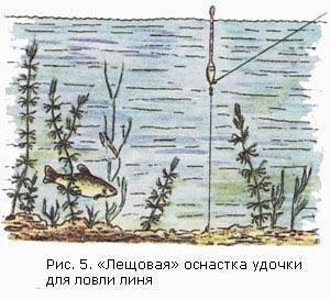 Термоклин – по временам года | рыбалка. сайт луганских любителей рыбалки
