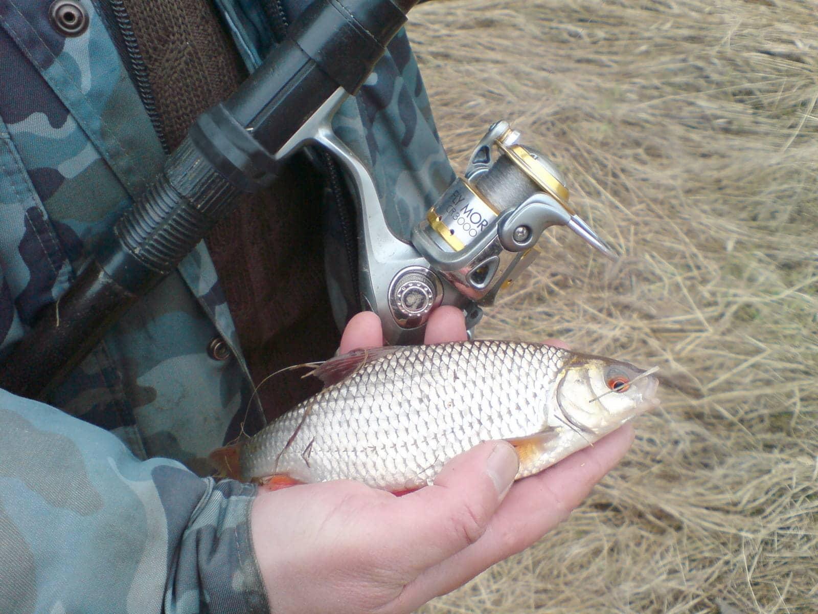 Снасти для ловли карася: методы, оснащение, наживка и прикормка