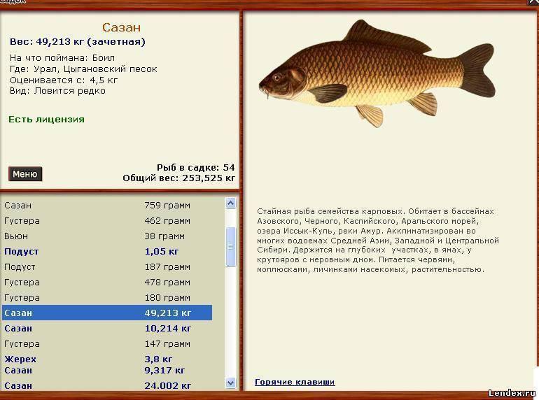 Рыбалка в бисерово - официальный сайт, цена и отзывы