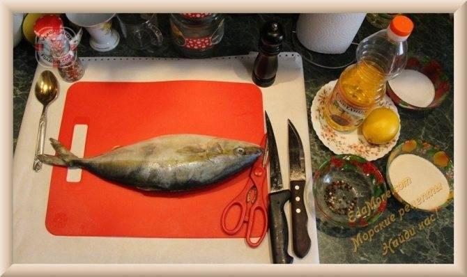 Лакедра рыба. описание, особенности, виды, образ жизни и среда обитания лакедры
