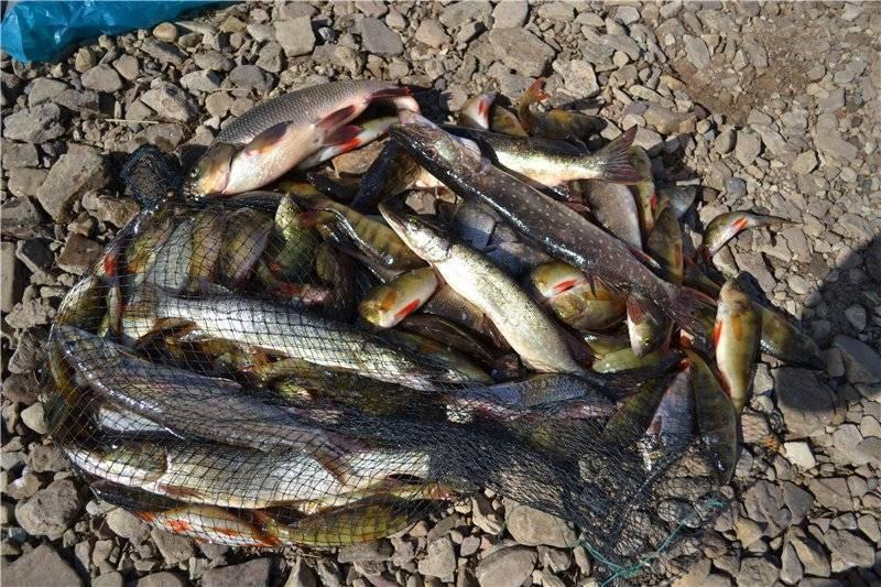 Рыбалка в раково - официальный сайт, отзывы на платную рыбалку, цены
