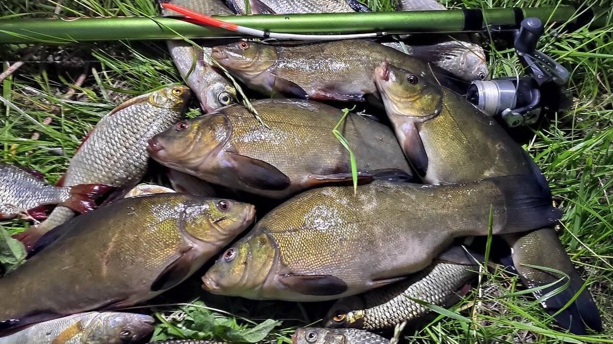Ловля линя - на что и как ловить, особенности рыбалки