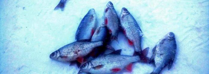 Рыбалка на можайском водохранилище и особенности водоема