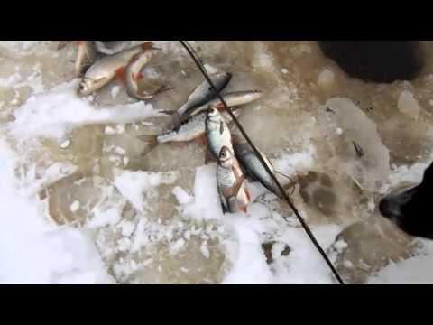 Снасть косынка – интересная ловля рыбы на зимней рыбалке и быстрый способ добыть живца для жерлиц