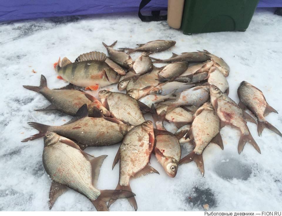 Весенняя и зимняя рыбалка на можайском водохранилище