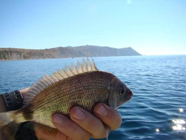Рыбы красного моря - обитатели морских глубин и их характеристики (110 фото)