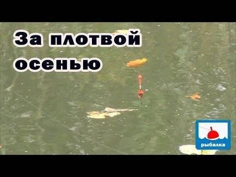 Ловля в проводку на течении: как ловить на реке, удочка для рыбалки