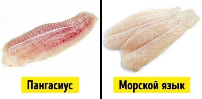 Что за рыба морской язык: ее польза и вред