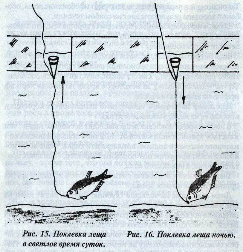 Ночная рыбалка на леща: нюансы и особенности