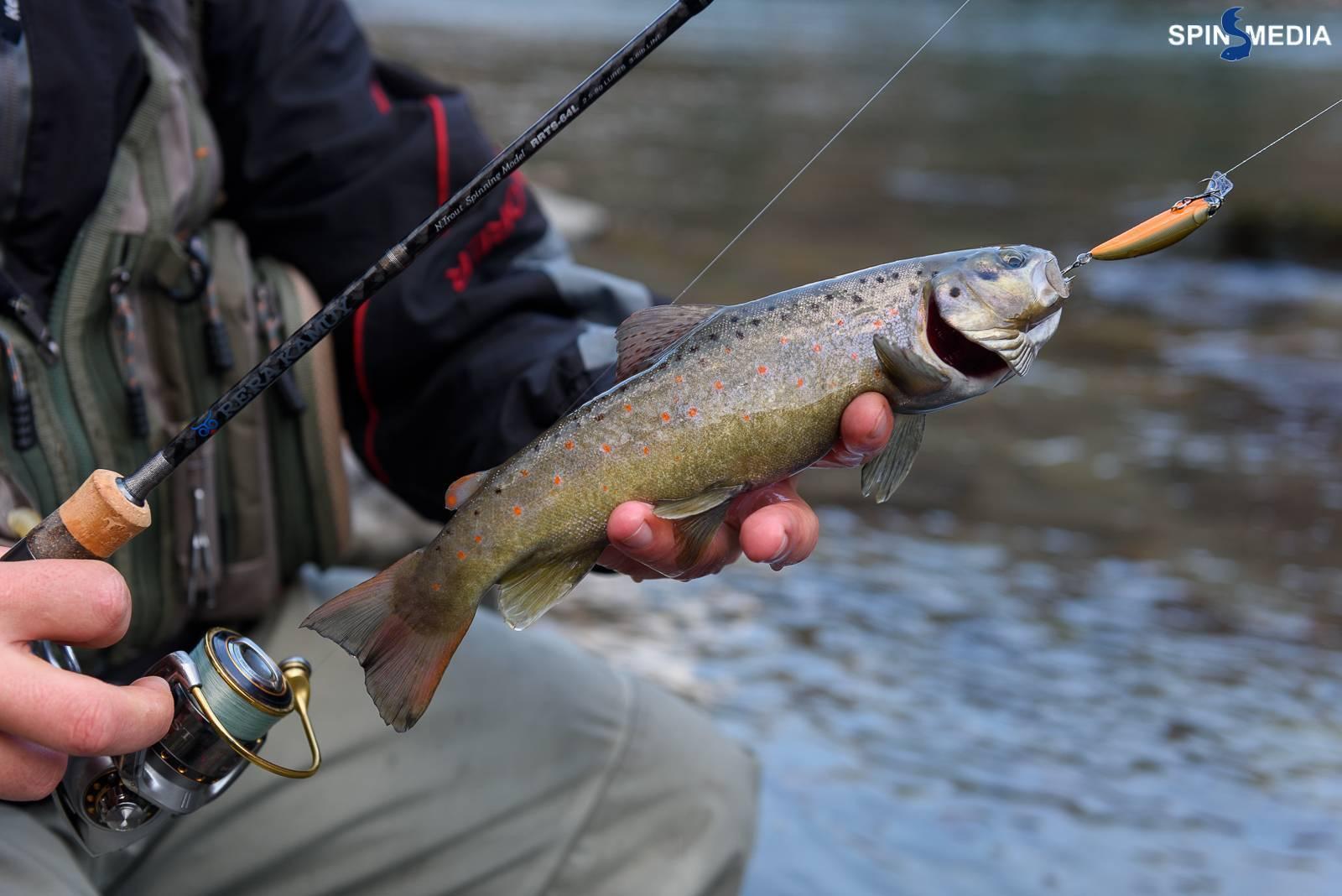 Морской карась (ласкирь) — описание рыбы и особенности ловли