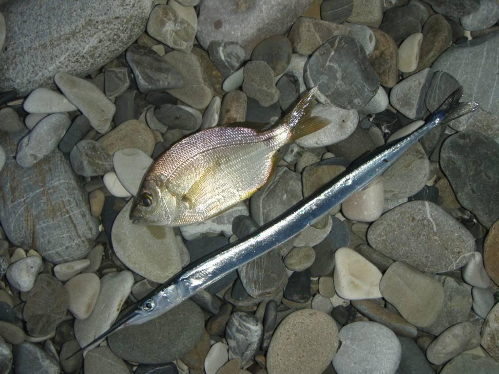 Рыбалка на азовском море с берега: какая рыба водится, на что ловить
