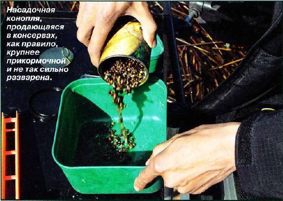 Семена конопли: отличная прикормка и наживка
