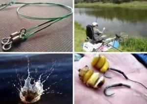 Как поймать сазана там, где он есть. советы продвинутого любителя - спортивное рыболовство