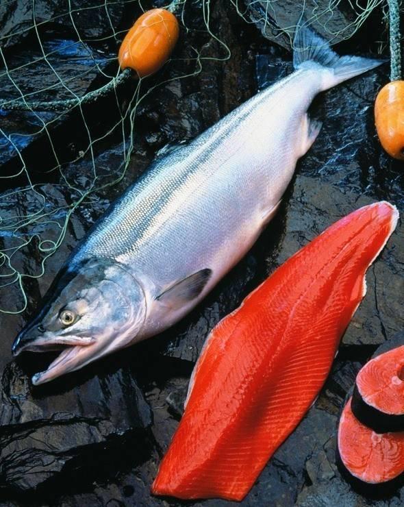 Рыба нерка: где живет, чем питается и как размножается, пищевая ценность мяса и рецепты приготовления