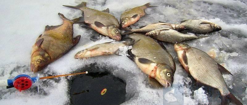 Рыбалка в сибири зимой