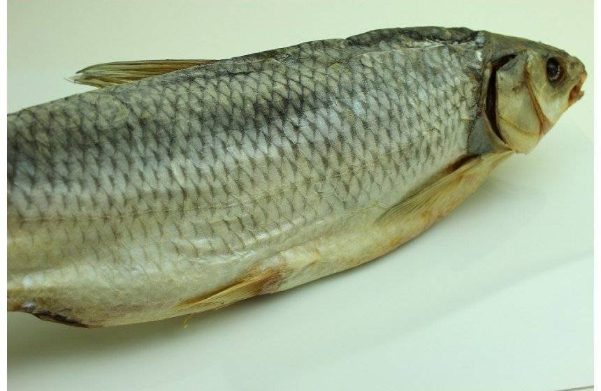 Рыба кутум — места обитания и ловля