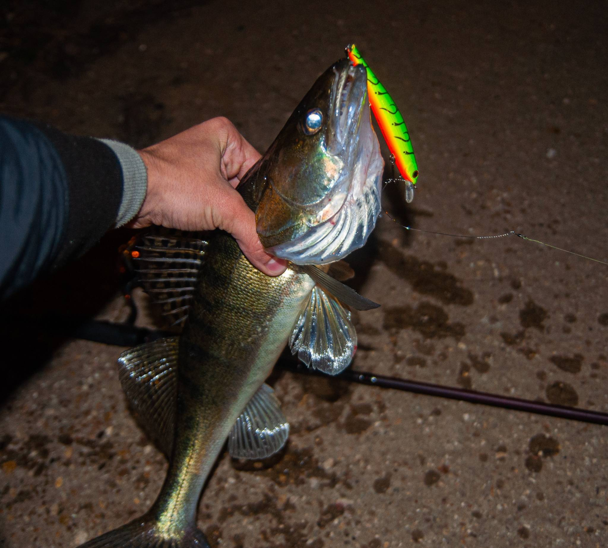 Ловля судака осенью на спиннинг ночью джигом   приманки, места