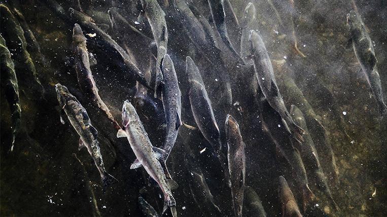 Окунь: речной и другие виды. как выглядит, внешнее строение окуня
