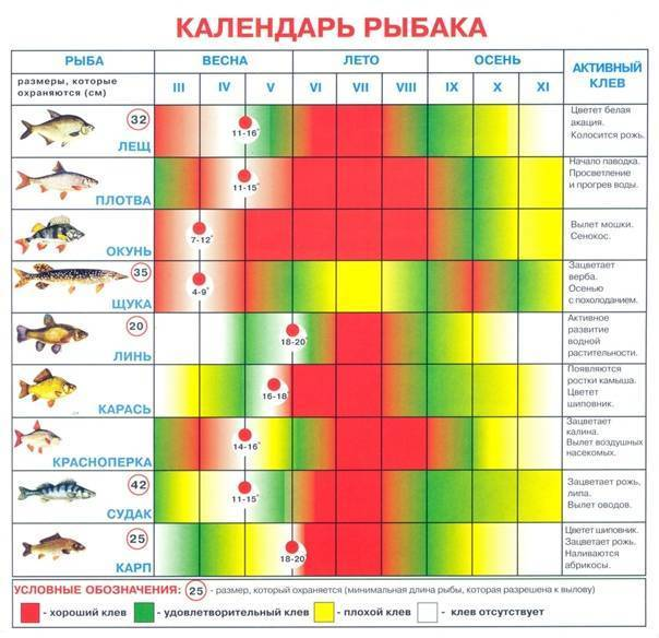 Календарь клева хищной рыбы 2020 лунный календарь для щуки 2020