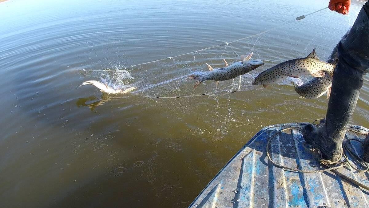 Ужасный улов в 1987 рыбаки вытаскивали. ужасающим уловом был шокирован весь мир. что привело к трагедии