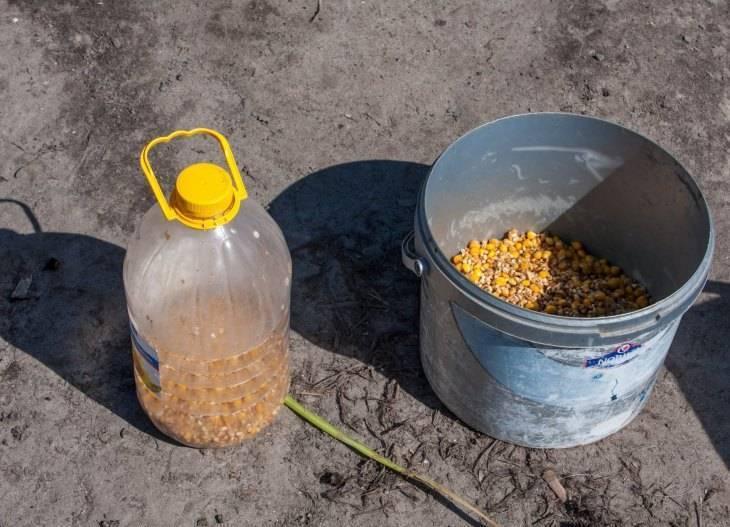 Готовка и хранение ферментированной кукурузы для рыбалки