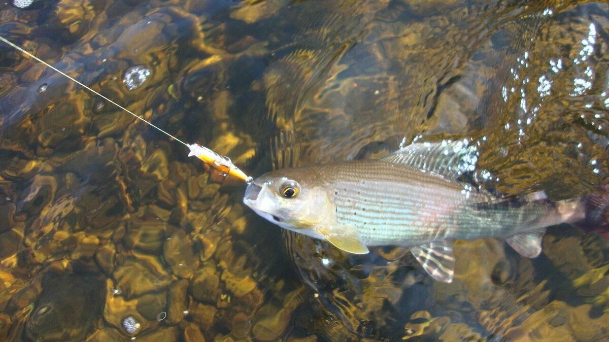 Рыбалка на байкале летом — все нюансы