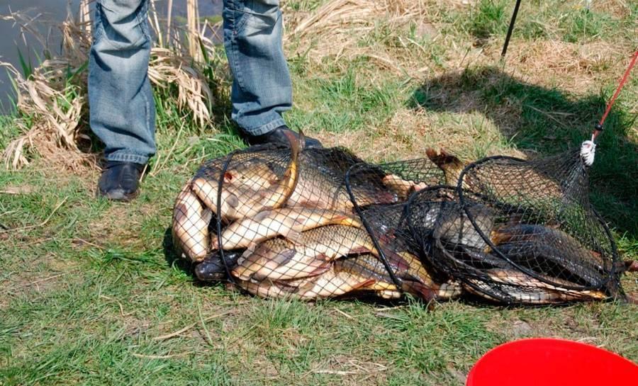 Рыбалка по правилам в красноярском крае: как ловить рыбу, не нарушая закон