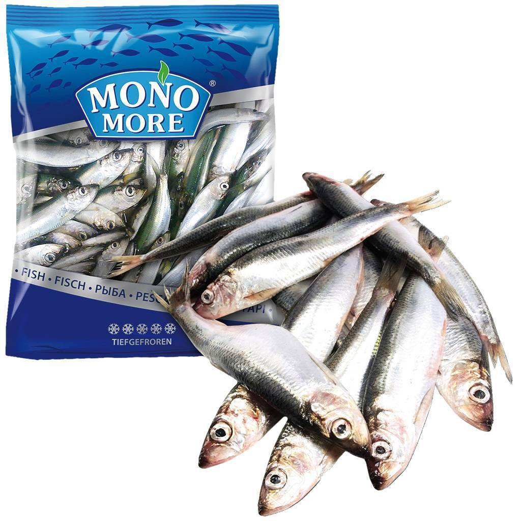 Рыба салака: описание вида