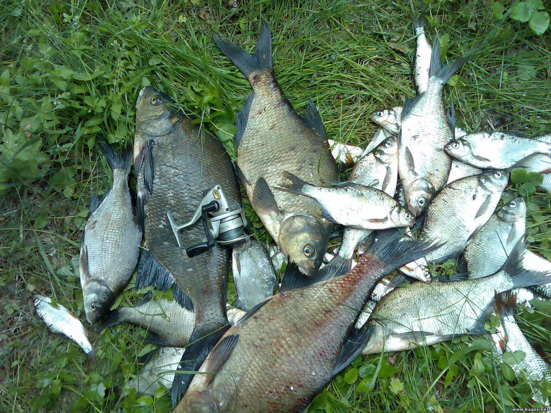 Рыбалка в могилеве и могилевской области: ловим рыбу на реке днепр в беларуси. где клюет сом и налим?
