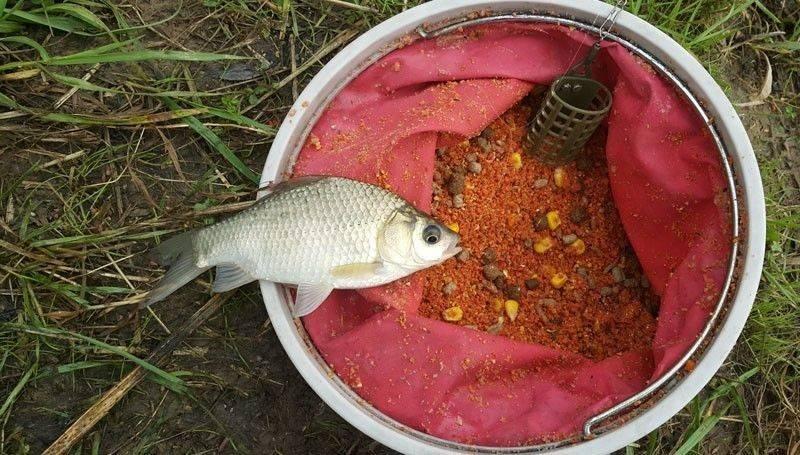 Каша для карася, приготовление в домашних условиях для рыбалки на кормушку