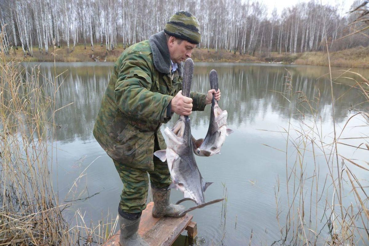 Места для рыбалки в нижегородской области – платная и бесплатная рыбалка!