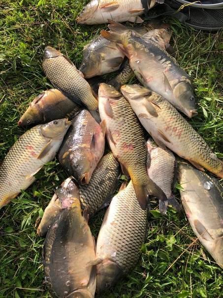 Река сестра московской области: особенности рыбалки, какая рыба водится, где лучше ловить