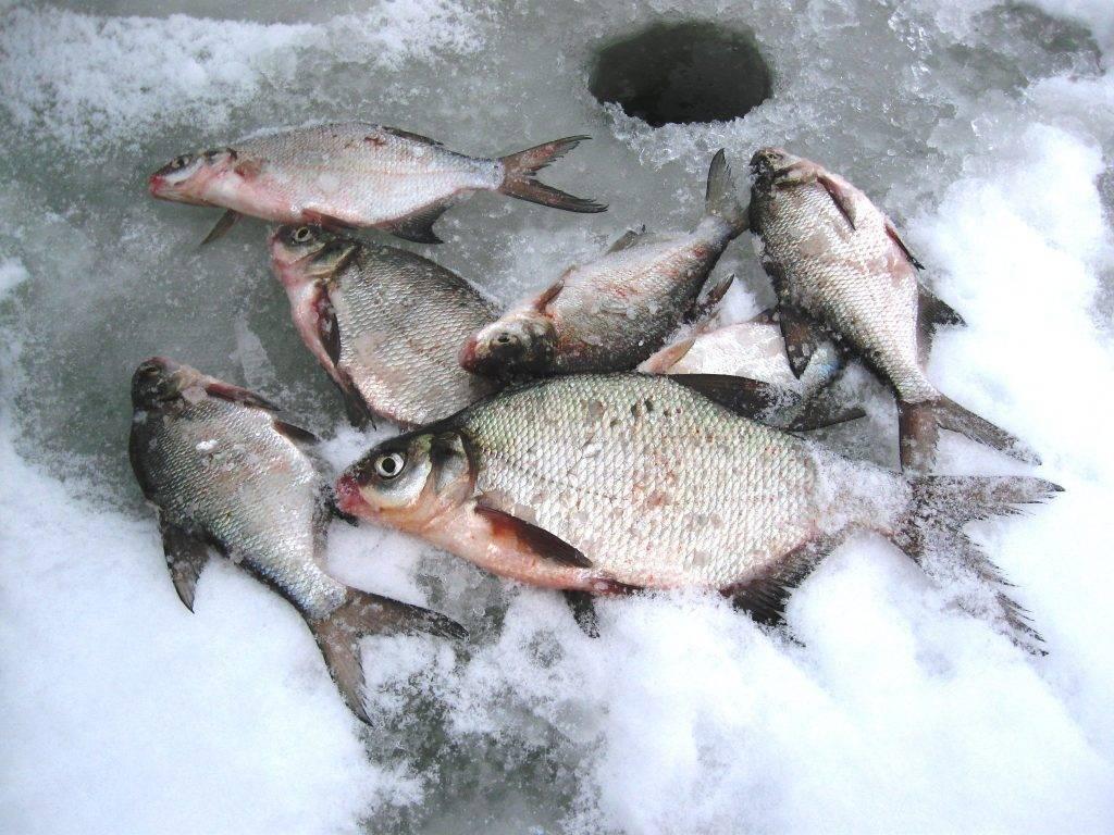 Ловля леща зимой