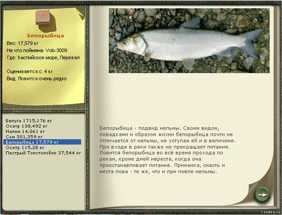Белорыбица - рецепты