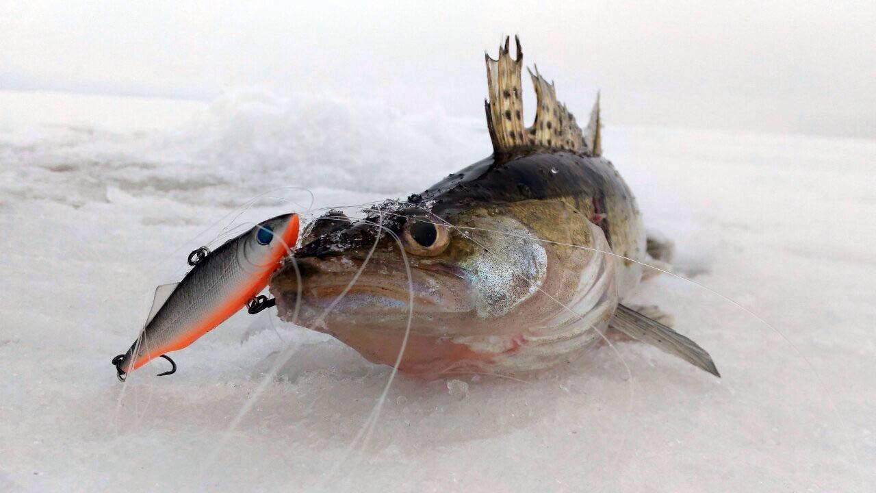 Зимние ратлины на окуня — ловись рыбка