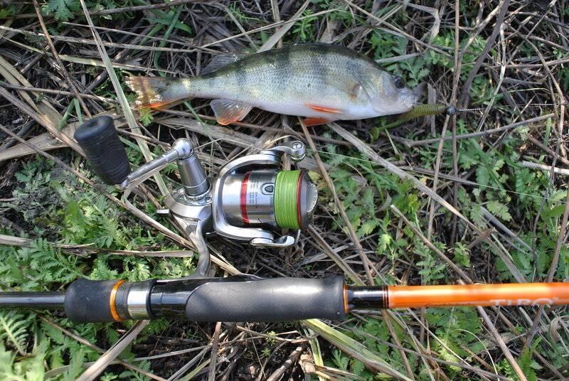 Ловля окуня в ноябре: рыбалка на окуня осенью