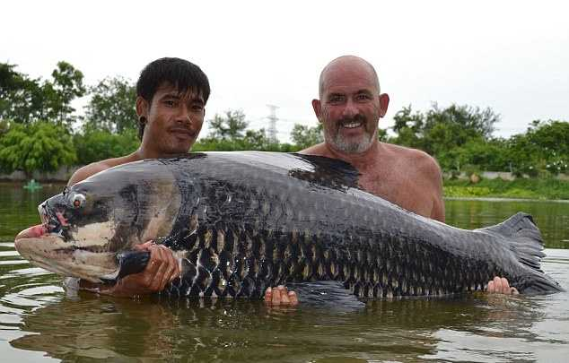 7 лучших рыб семейства карповых