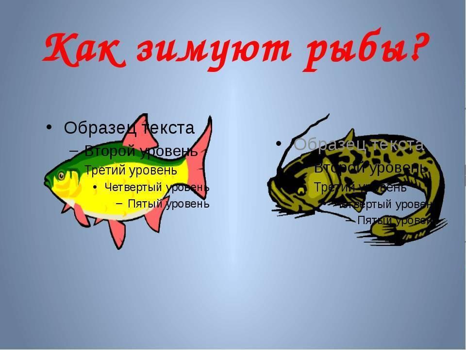 Как зимуют рыбы? описание, фото и видео  - «как и почему»