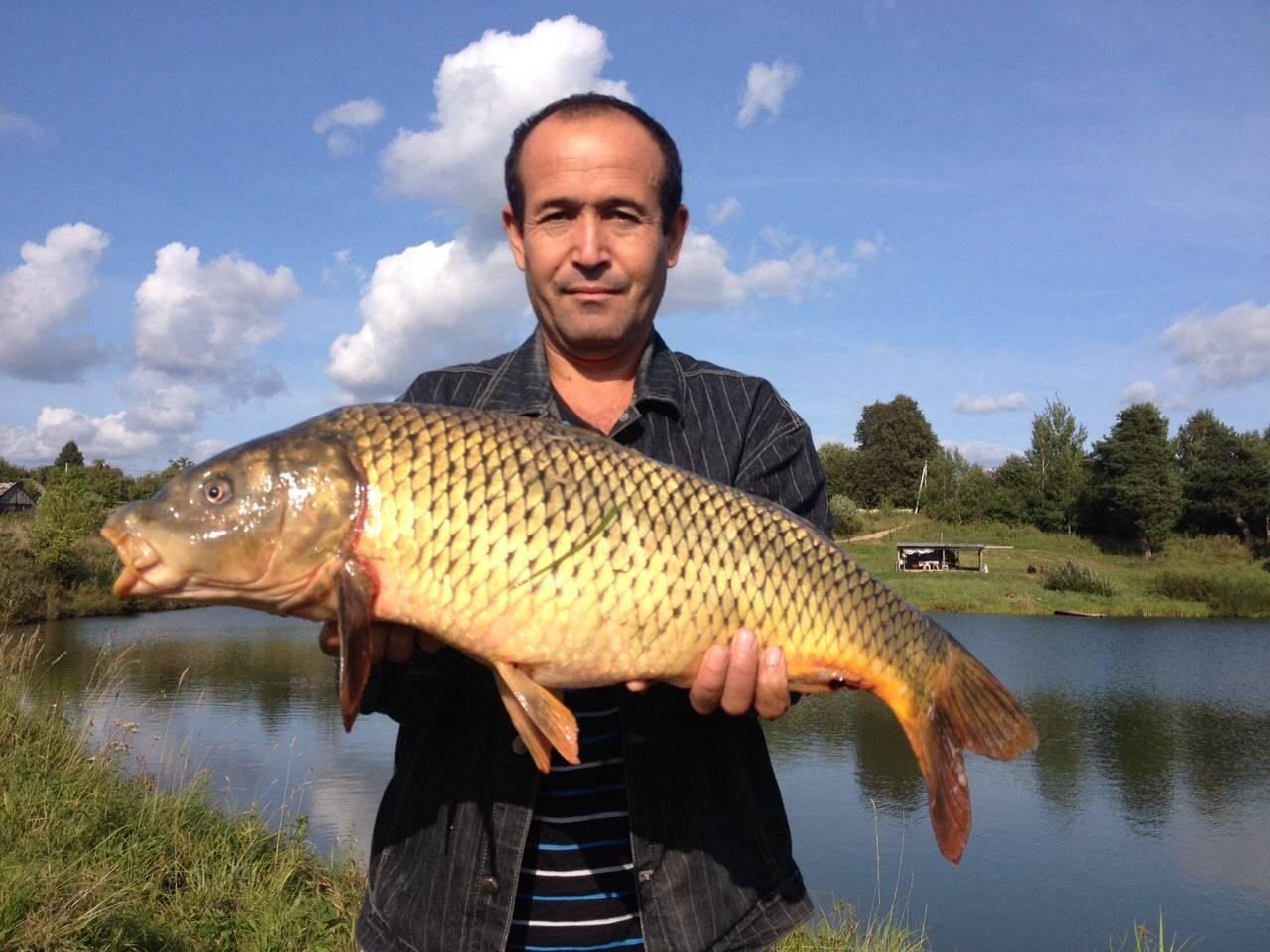 Рыбалка во владимирской области, лучшие места для ловли во владимире (бабуринское озеро, клязьма, нерль)