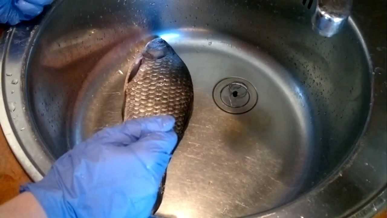 Как правильно чистить и разделывать осетра в домашних условиях