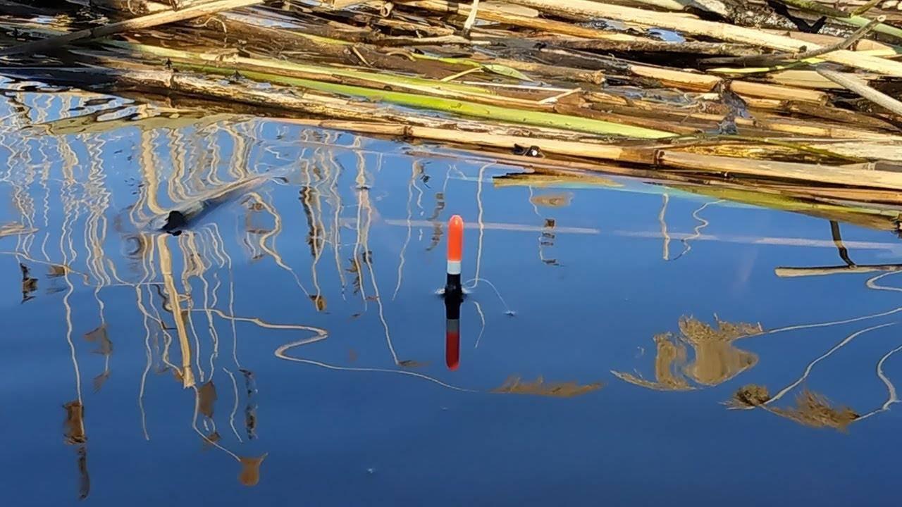Летняя рыбалка. за щукой с поплавком – рыбалке.нет