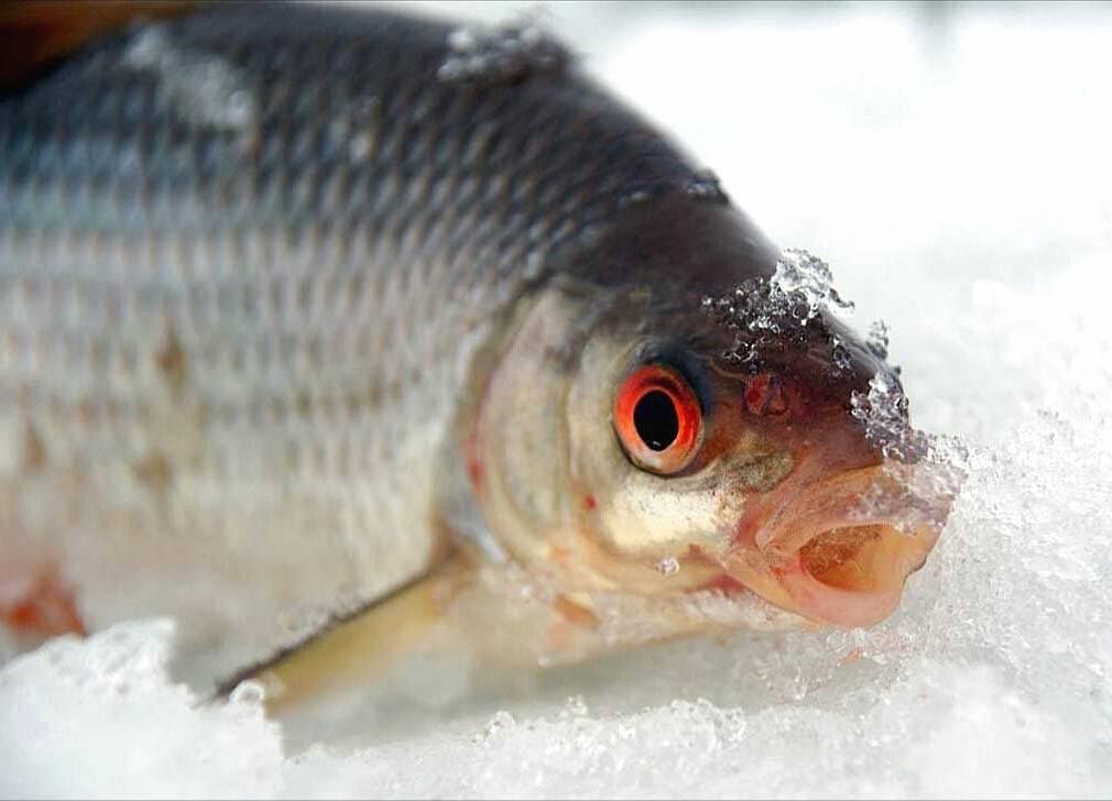 Мормышки на чебака для зимней рыбалки - про рыбалку