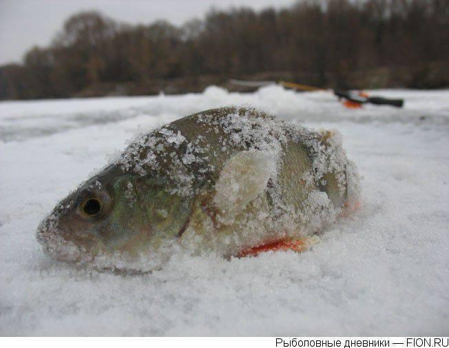 Мощные снегопады и декабрьская оттепель: какая погода ожидает жителей центральной россии в начале зимы — рт на русском